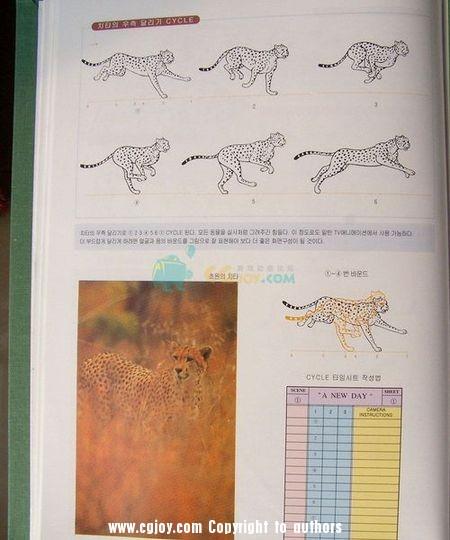 豹1.jpg