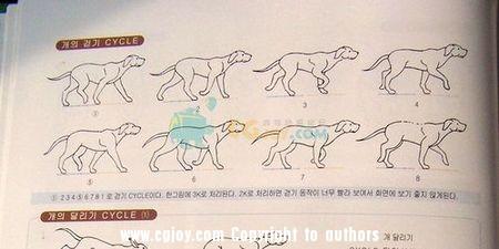 犬10.jpg