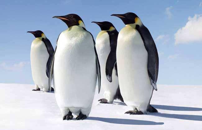 我们眼中的企鹅.jpg