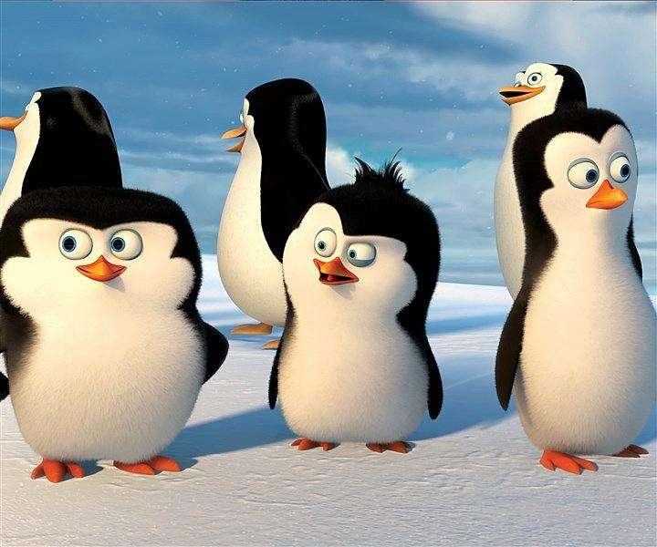 饲养员眼中的企鹅.jpg