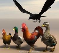 Unity3d 鸟类模型下载