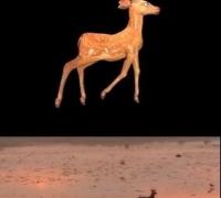 随手做的鹿