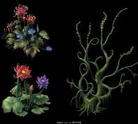 非常精致的植物