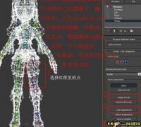学习physique蒙皮视频教程的问题