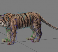 老虎模型带骨骼权重-全套动作!!!!!