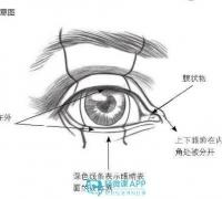 二次元眼睛的画法,适合初学者学习