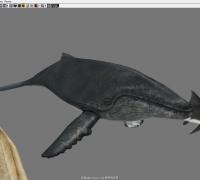 鲸鱼鳄鱼海龟鲨鱼
