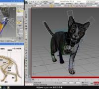 虎斑猫绑定完的模型