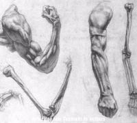 绘画人体的手脚结构怎么画?