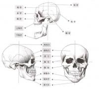 【精品】怎么画人物面部?教你人物不同角度的面部画法!