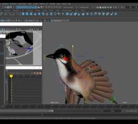 MAYA 写实鸟类动画制作 带项目文件