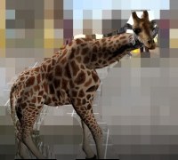 求购写实类动物模型动画