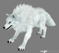 四条不同毛色的狼