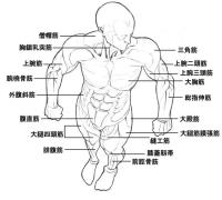 如何掌握畫人體結構?只能大量練習嗎?