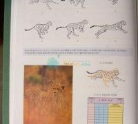韩国 动物运动规律书籍   难得一见的好书