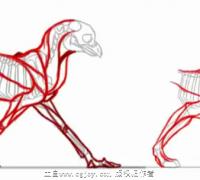手绘-四足动物跑解剖分析视频