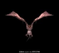 四翼邪恶蝙蝠一只带绑定带贴图