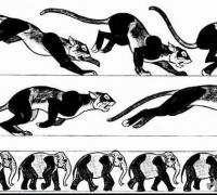 四足动物参考