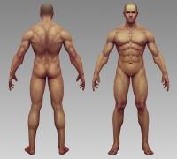 贴图的肌肉的人体模型,男性